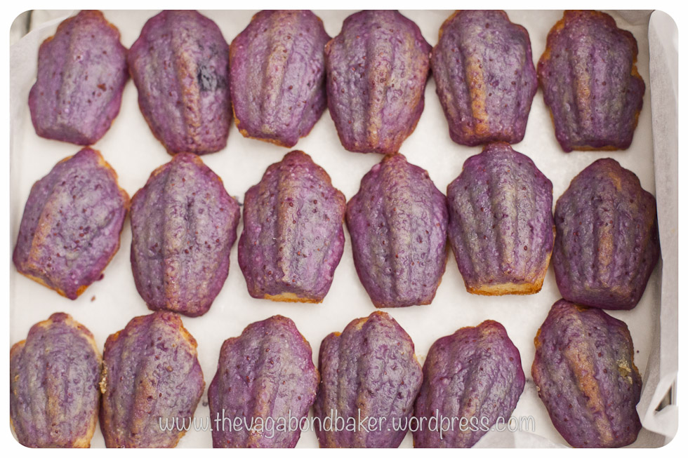 glazed blueberry madeleines | Vagabond Baking